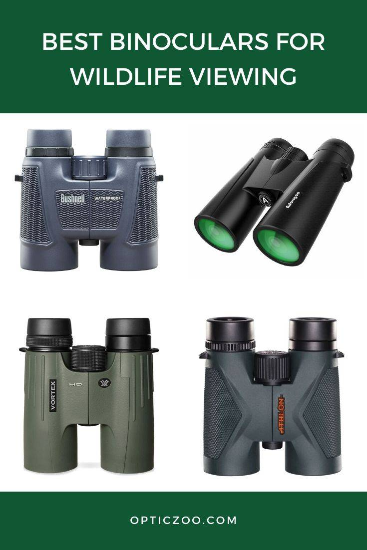 Best Binoculars For Wildlife Viewing
