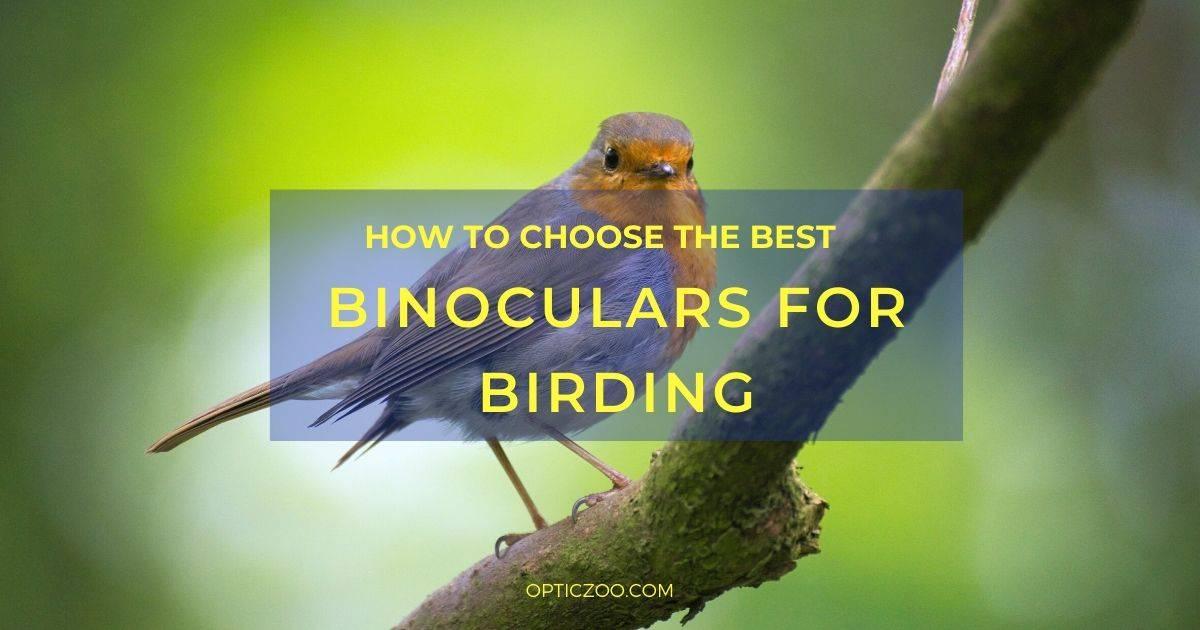 Best Binoculars For Birding - Buyer's Guide 1 | OpticZoo - Best Optics Reviews and Buyers Guides