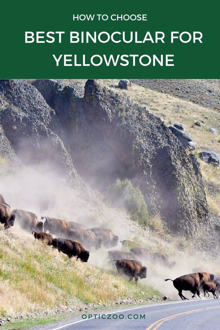 Best Binocular for Yellowstone