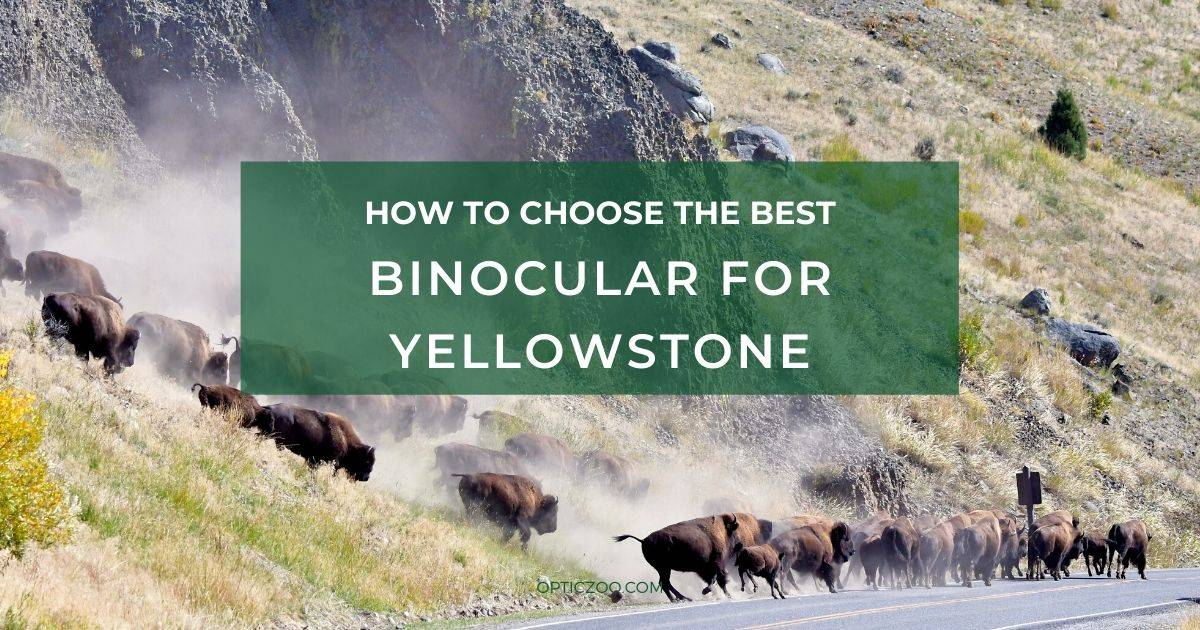 Best Binocular for Yellowstone - Buyer's Guide 1 | OpticZoo - Best Optics Reviews and Buyers Guides