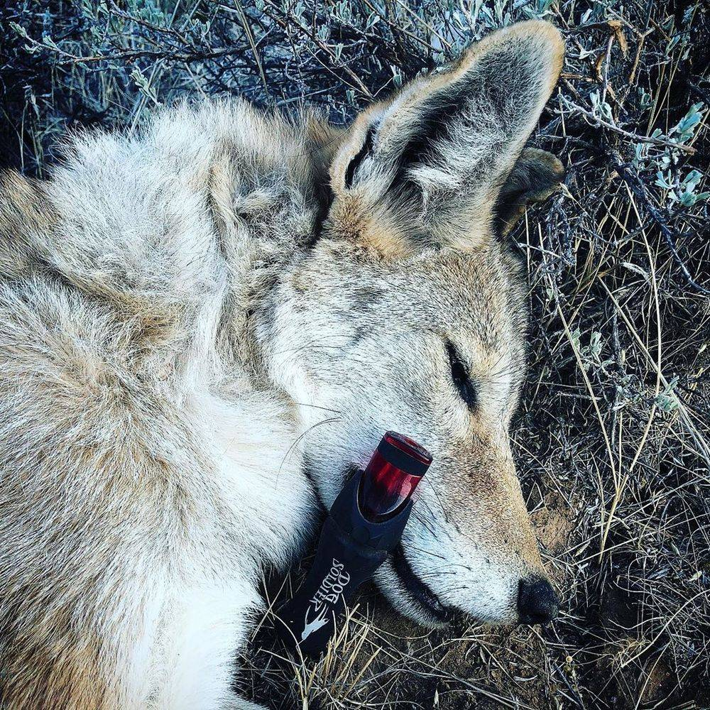 Coyote mouth call