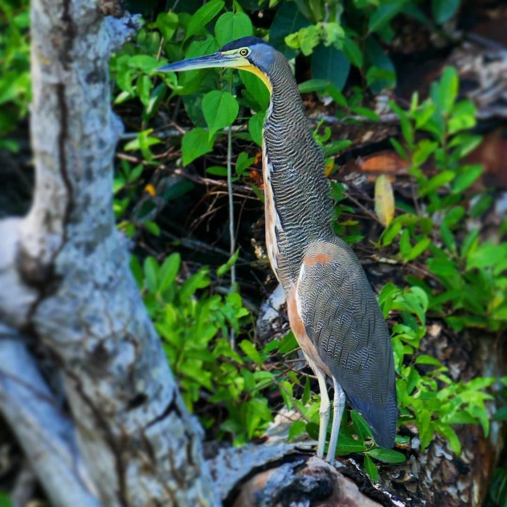 Leica 40318 Trinovid 8×42 HD Binoculars For Birding